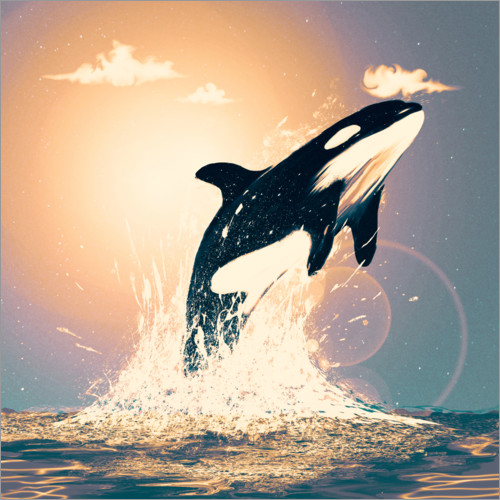 Póster Premium Orcas can fly