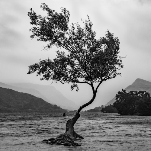 Póster Premium Lonely tree defies the weather