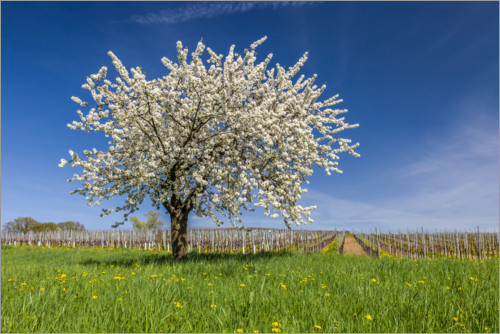Póster Premium Spring dream - blooming cherry tree on flower meadow