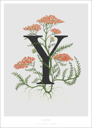 Póster Premium Y is for Yarrow