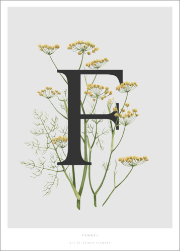 Póster Premium F is for Fennel
