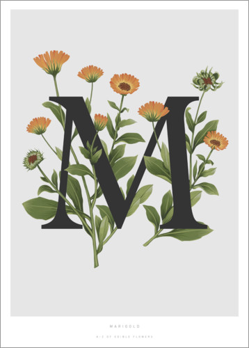 Póster Premium M is for Marigolds