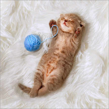 Póster Premium Kitten with a ball all of wool