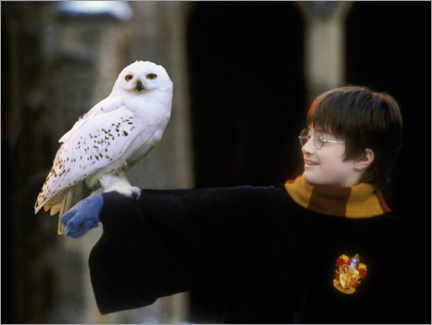 Póster Premium  Harry Potter and the Sorcerer's Stone - Harry & Hedwig
