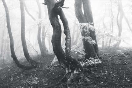 Quadro em plexi-alumínio  Unusual beech in the forest in thick fog - The Wandering Soul