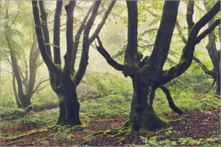 Autocolante decorativo  Trees in the morning light with fog - The Wandering Soul