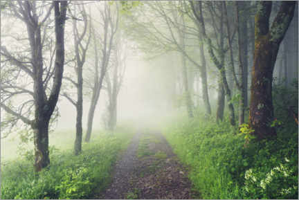Quadro em alumínio  Alley of trees in spring with thick fog - The Wandering Soul