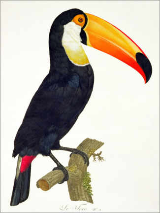 Póster Premium  Toucan No.2 - Jacques Barraband
