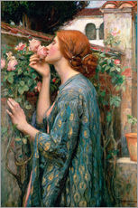 Autocolante decorativo  A alma da rosa ou Minha doce rosa - John William Waterhouse