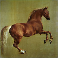 Autocolante decorativo  Whistlejacket - George Stubbs