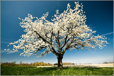 Autocolante decorativo  Single blossoming tree in spring - Peter Wey