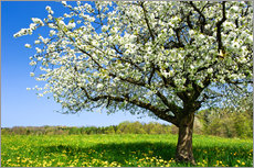 Quadro em plexi-alumínio  Blossoming trees in spring rural meadow - Peter Wey
