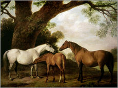 Autocolante decorativo Two Shafto Mares and a Foal
