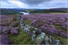 Autocolante decorativo  Heather covered Bamford Moor and dry stone wall - Eleanor Scriven
