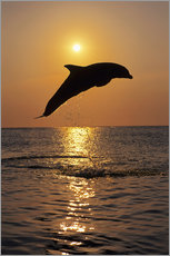 Autocolante decorativo  Dolphin in the sunset - Tom Soucek