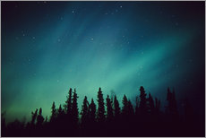 Autocolante decorativo  Northern Lights over a spruce forest - Greg Hensel