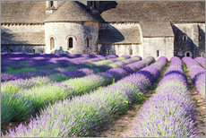 Autocolante decorativo  Famous Senanque abbey with its lavender field, Provence, France - Matteo Colombo