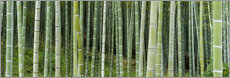 Autocolante decorativo  Green bamboo forest in Kyoto, Japan - Jan Christopher Becke
