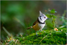 Quadro em plexi-alumínio  Cute tit standing on the forest ground - Peter Wey