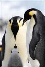 Autocolante decorativo  Pinguim Adelie pula no iceberg - Ralph Lee Hopkins
