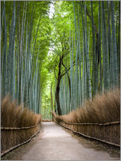 Autocolante decorativo  Bamboo Forest in Kyoto Sagano Arashiyama, Japan - Jan Christopher Becke