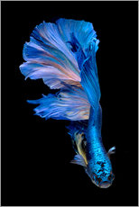 Autocolante decorativo  magnificent blue fish