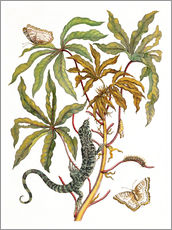 Autocolante decorativo  cassava with crocodile and butterfly metamorphosis - Maria Sibylla Merian