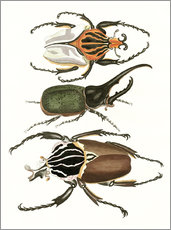 Autocolante decorativo  Large and rare beetles - German School