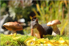 Autocolante decorativo  Sweet squirrel on fodder search - Uwe Fuchs