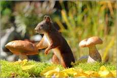 Autocolante decorativo  Squirrel on fodder search - Uwe Fuchs