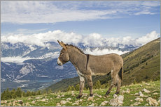 Autocolante decorativo  Donkeys on a lonely mountain meadow