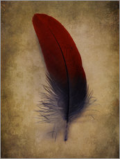 Autocolante decorativo Blue and red feather