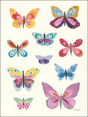Póster Premium Butterfly Charts II