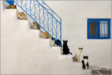 Póster Premium  Cats on stairs in Greece - Katho Menden