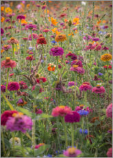 Póster Premium The colorful wild flowers of France