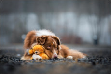Póster Premium Australian Shepherd with Teddy