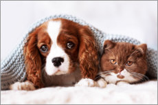 Autocolante decorativo Friends - puppy and kitten