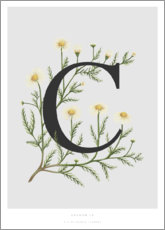 Póster Premium C is for Chamomile