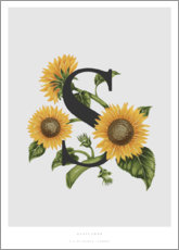 Póster Premium  S is for Sunflower - Charlotte Day