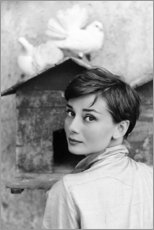 Póster Premium  Audrey Hepburn no pombal - Celebrity Collection
