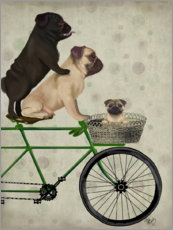 Póster Premium Pugs on Bicycle