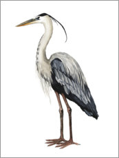 Póster Premium  Great Blue Heron - Grace Popp