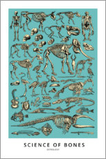 Póster Premium  Osteologia (inglês) - Wunderkammer Collection