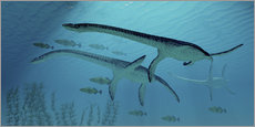 Autocolante decorativo  Three Plesiosaurus dinosaurs migrate with a school of fish. - Corey Ford