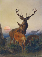Autocolante decorativo  A Stag with Deer at Sunset - Charles Jones