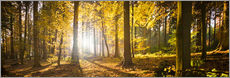 Quadro em plexi-alumínio  Autumn forest backlit with sunshine and yellow autumn leaves - Jan Christopher Becke