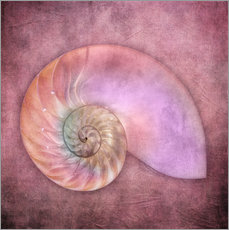 Autocolante decorativo  Sea shell - INA FineArt