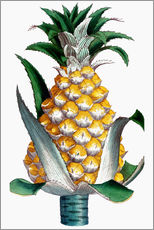 Autocolante decorativo  Pineapple, 1789.