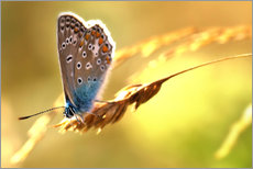 Autocolante decorativo  Butterfly in late summer - Julia Delgado