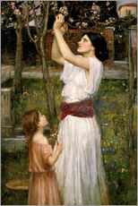 Autocolante decorativo  Gathering Almond Blossoms - John William Waterhouse